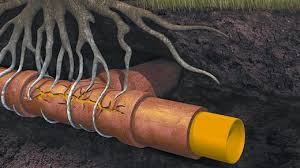 Blocked-drain-via-tree-root